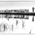 Pastorale-Expo DAKAR 1976-CC BY-NC Jacques BOUBY