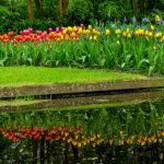 Parc de Keukenhof- CC BY-NC Jacques BOUBY