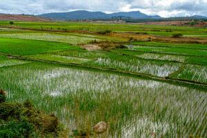 environs de Fianarantsoa - CC BY-NC Jacques BOUBY